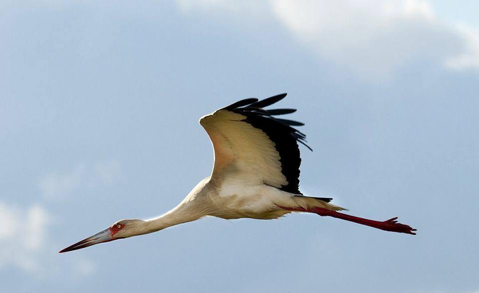 Birding Wildlife in Iberá