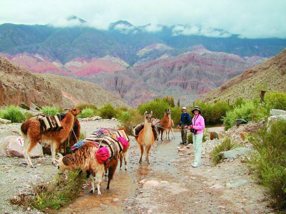 Atacama & Salta - Llamas