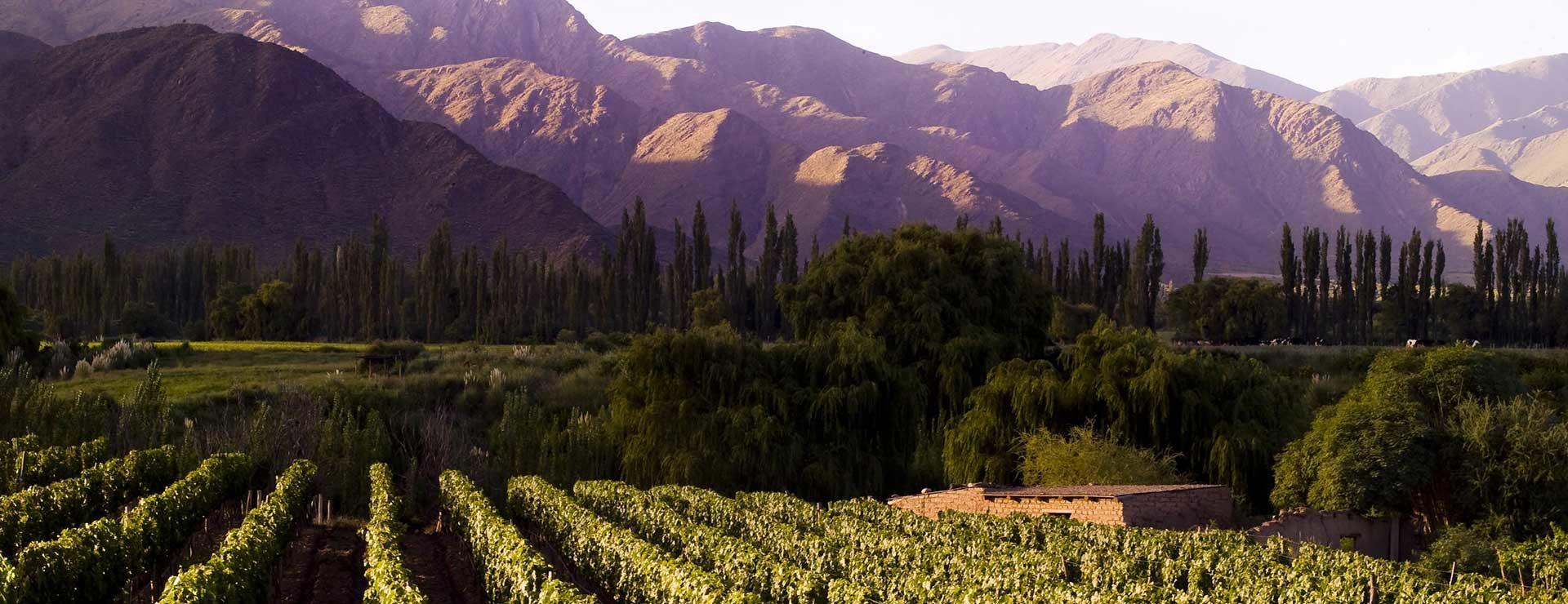 Mendoza Wine Country