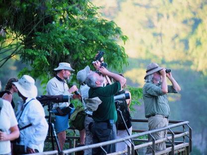 Birding in Iguazu