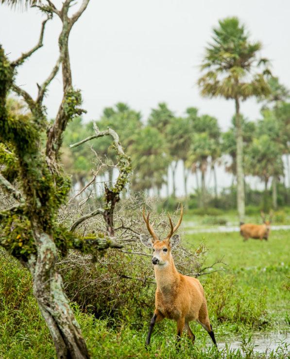 Wildlife in Iberá