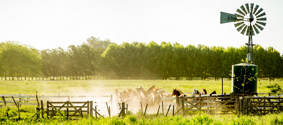Ranch in The Pampas