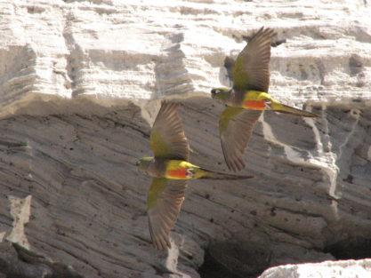 Birding in Atlantic Patagonia