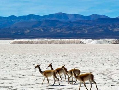 Salt Flats in Atacama and Salta