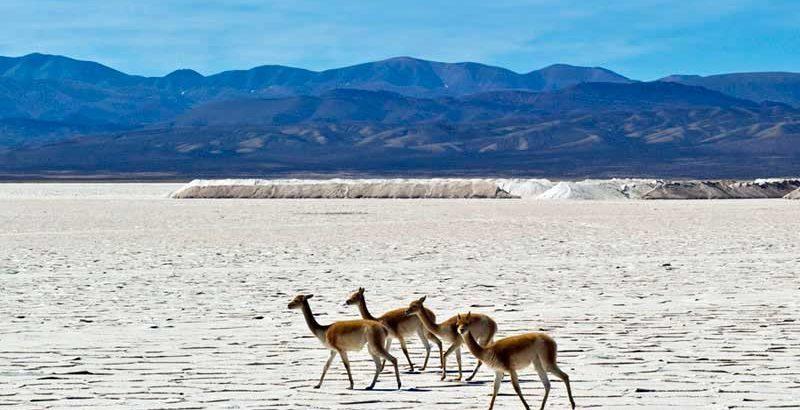 Salt Flats in Atacama and Salta