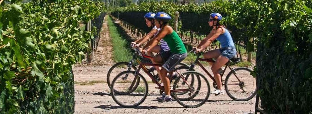 Biking among Vineyards