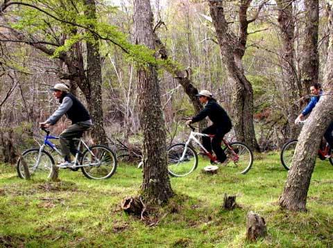 Biking in Chalten Tree Forest