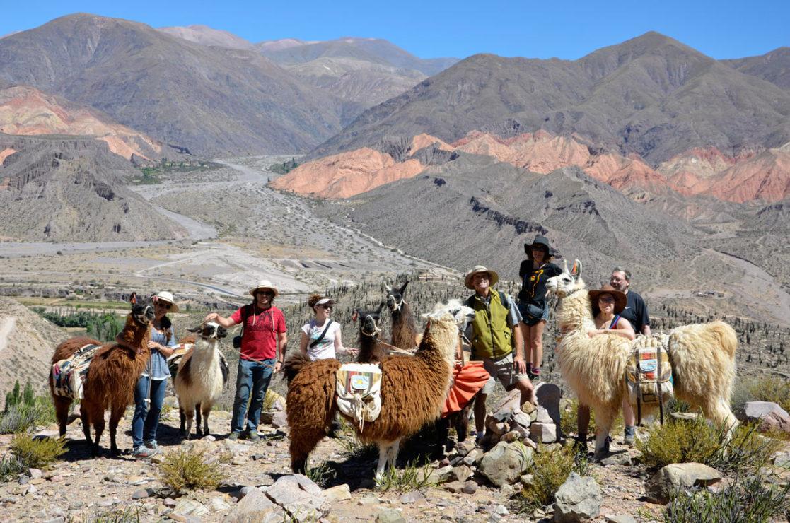 Llamas. Northwest Argentina.