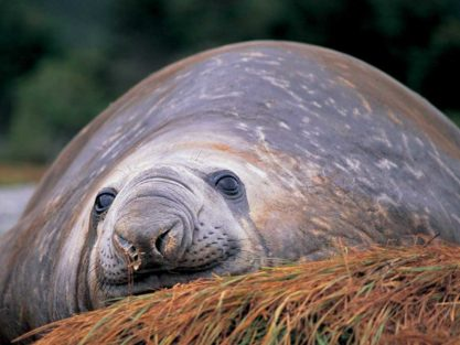 Photography Tours in Patagonia - Sea Lion