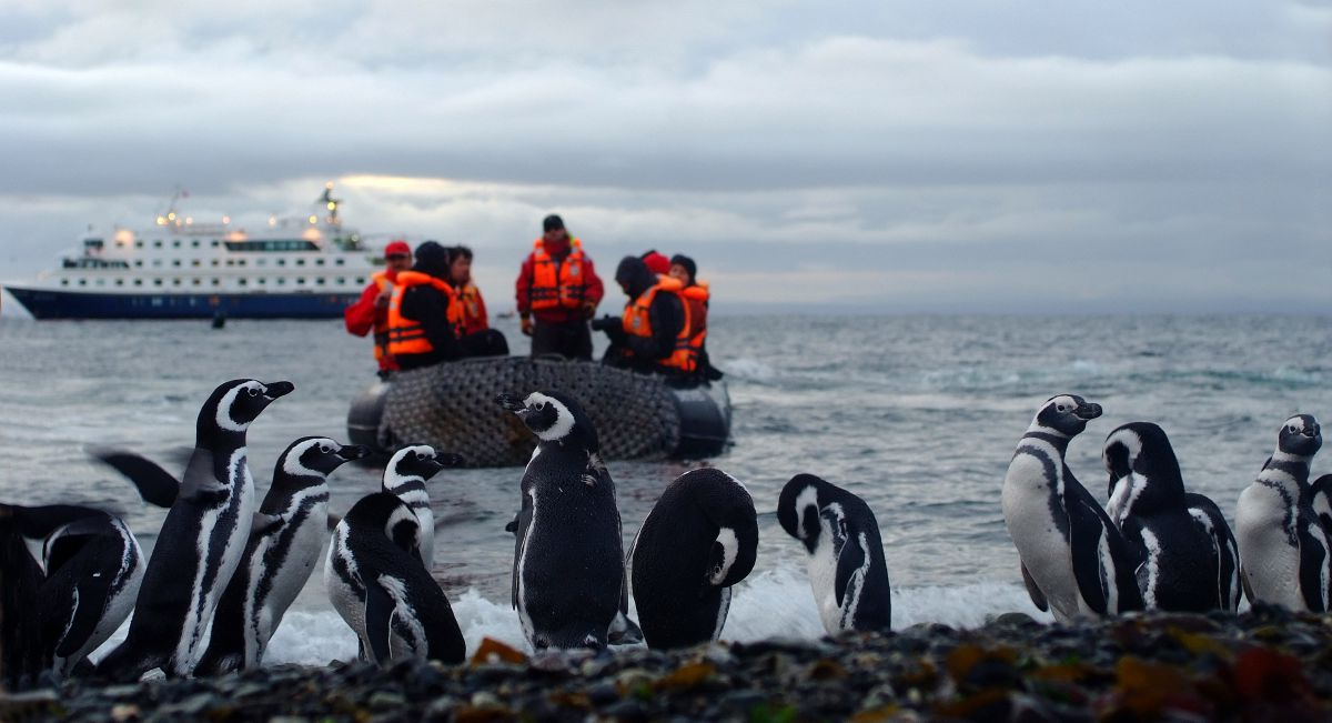 Group of Penguins at Shore