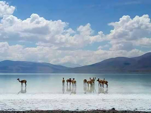Salt Flats Wildlife